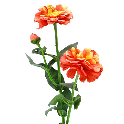 Floare Zinnia 62 Cm