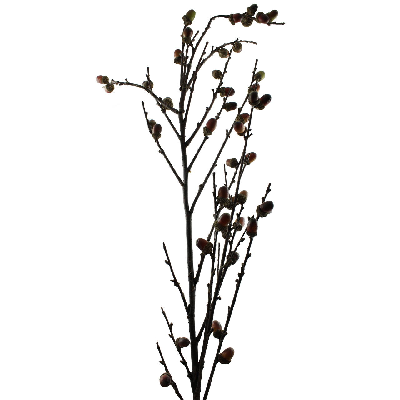 Ramura decorativa cu ghinde 140 cm( 391567)