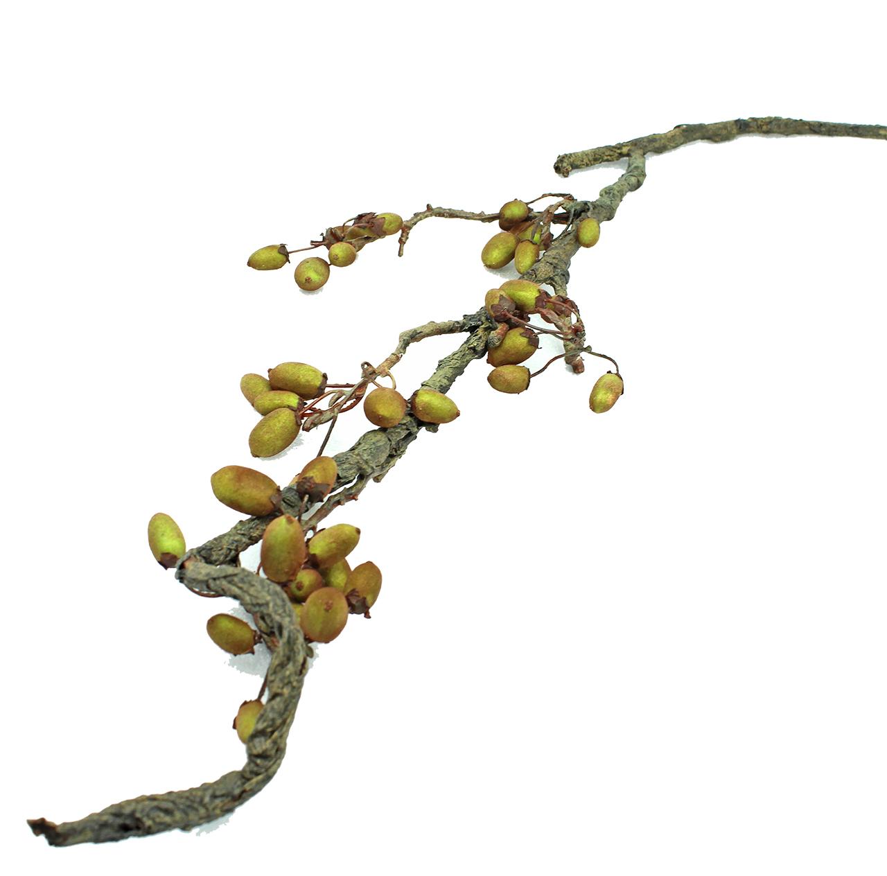 Ramura decorativa Paducel galben 95 cm( 391565)