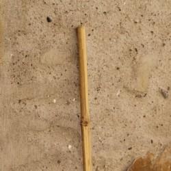 Fir natural Bambus 4x150 cm