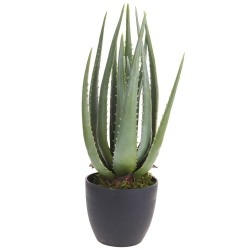 Planta decorativa Aloe in ghiveci 45 cm
