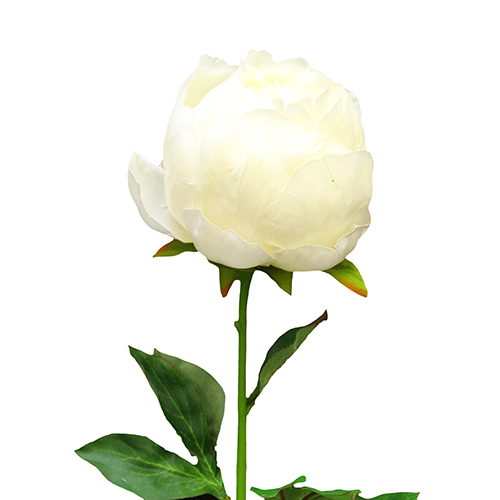 Floare Bujor alb 50 cm