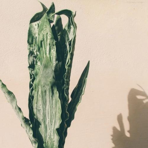 Floare decorativa Tropical 30x108 cm chicville 2021