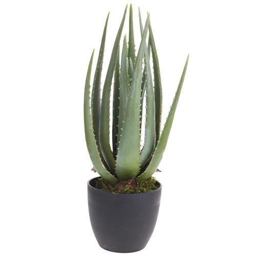 Planta decorativa Aloe in ghiveci 45 cm chicville 2021