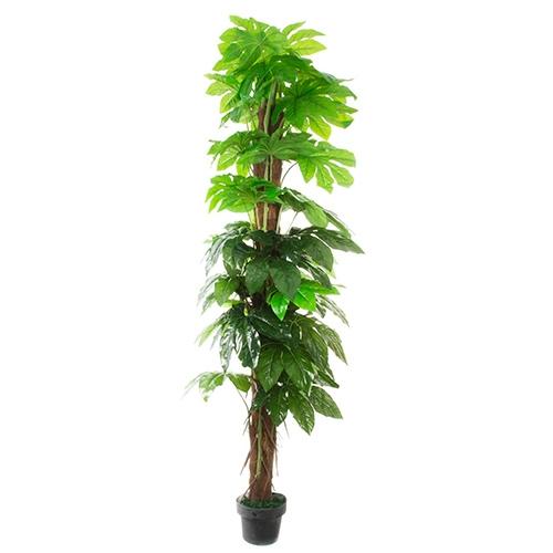Planta decorativa inalta 200 cm chicville 2021