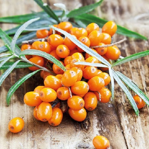 Servetele Berries 25x25 cm chicville 2021