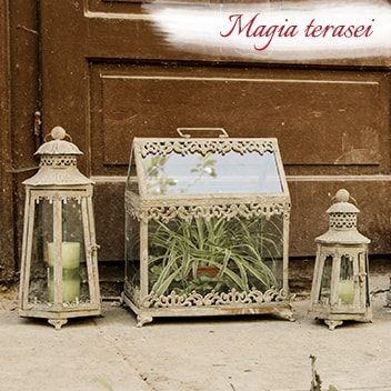 Magia terasei